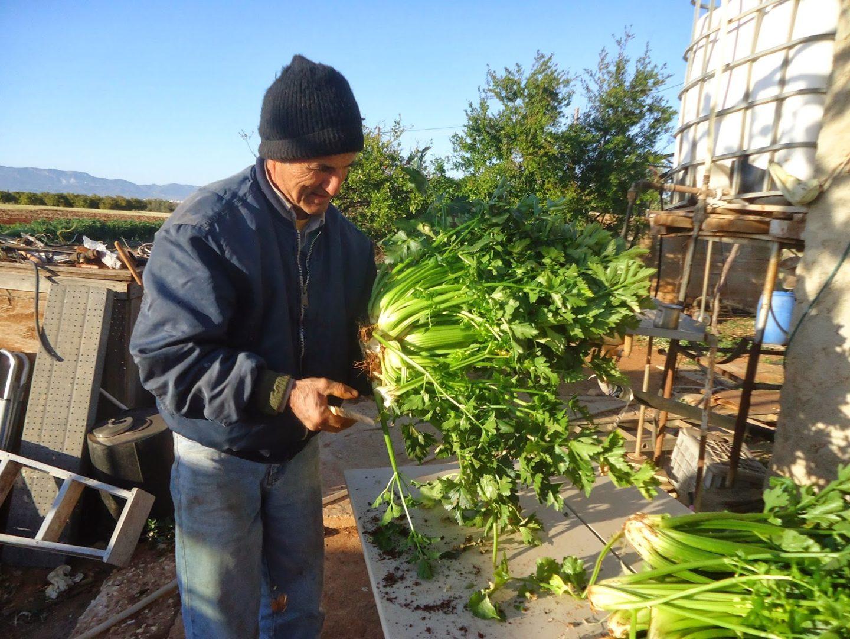 Εφαρμογή Ζεόλιθου για καλλιέργεια πατατών στο κτήμα Γεώργιου Αντωνίου, Παλιομέτοχο, Κύπρος