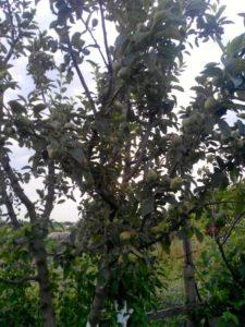 Ζεολιθικά λαχανικά, δέντρα και αμπέλια από παραδοσιακούς σπόρους, Νέα Ορεστιάδα