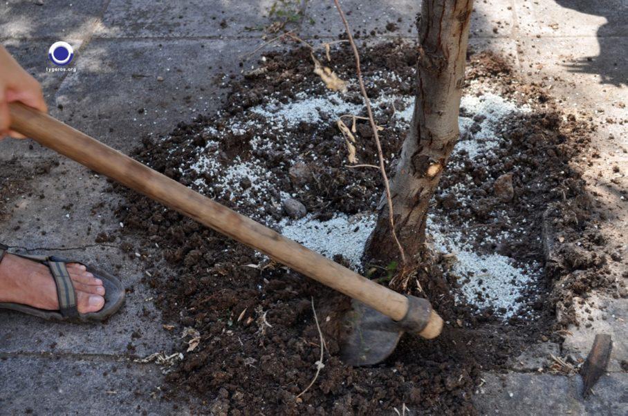 Ενσωμάτωση ζεόλιθου στο αστικό περιβάλλον Αλεξανδρούπολης - Νίκος Λυγερός