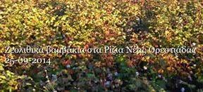 βαμβάκια με ζεόλιθο στα Ρίζια Νέας Ορεστιάδας | Zeolife.gr
