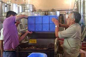 ζεολιθική ενημέρωση. Οινοποιείο Αγία Μαύρη, Κύπρος | Zeolife.gr