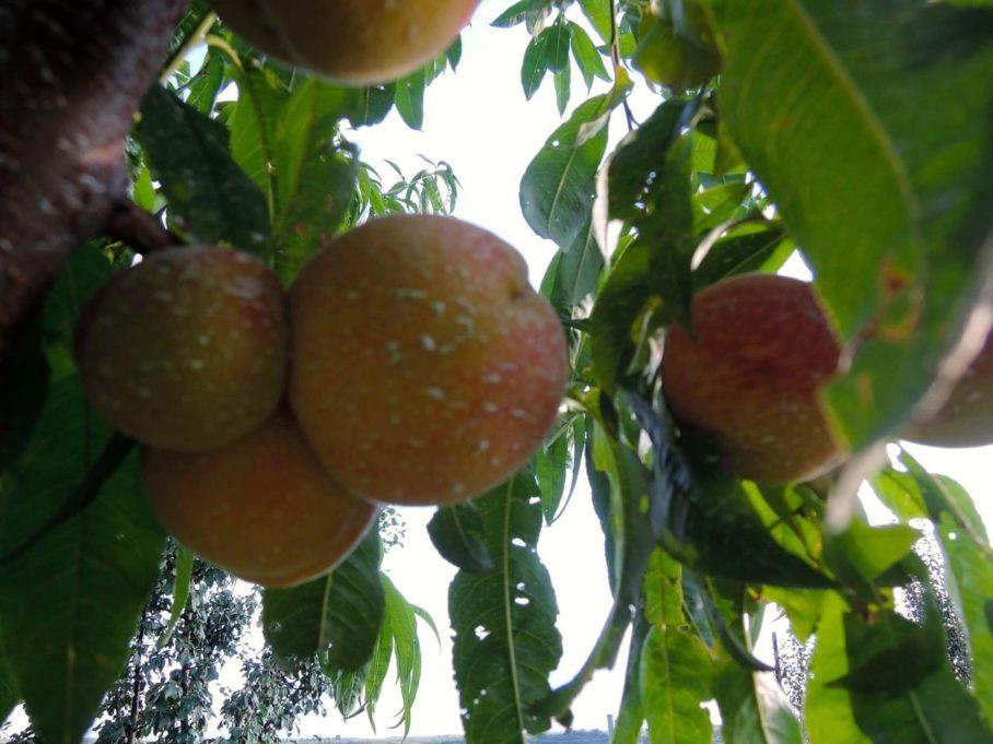Η ζεολιθική επιτυχία του Γρηγόρη Αζορίδη στη Νέα Ορεστιάδα