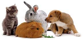 Ζεόλιθος και κατοικίδια ζώα | Zeolife.gr