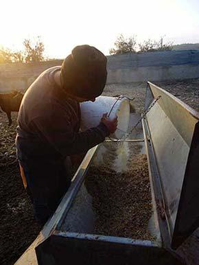 Ο ζεόλιθος στην κτηνοτροφία | Zeolife.gr