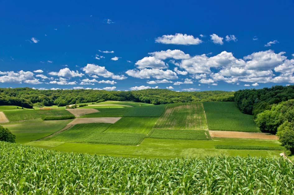 HORIZON 2020 - Agriculture & Forestry | Zeolife.gr