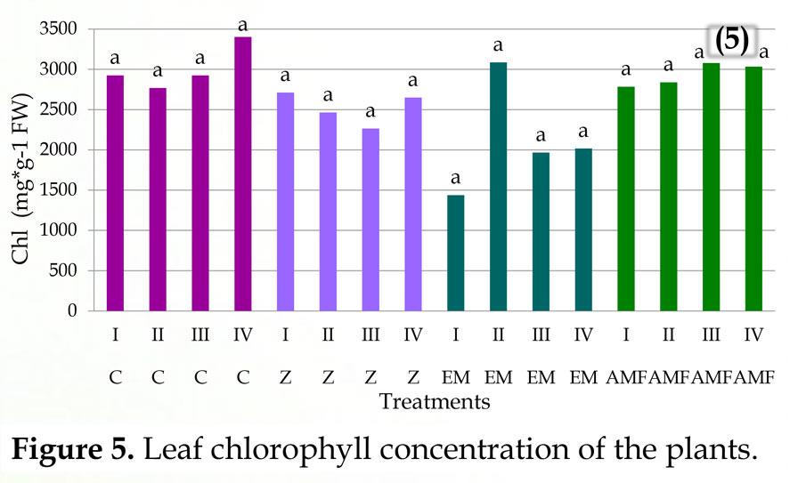 Επίδραση του ζεόλιθου, ενεργών μικροοργανισμών, μυκόριζας και εκχύλισμα φυκιών σε φυτά μήλου που αρδεύονται με αλατούχο νερό - Effect of zeolite, effective microorganisms, mycorrhizae and seaweed extract on apple plants irrigated with saline water