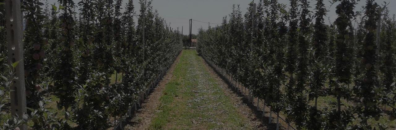 Μηλιές με ζεόλιθο και διατομίτη στην Καστοριά [Φωτογραφίες]
