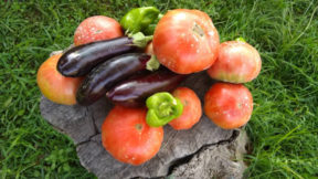 Λαχανόκηπος παραδοσιακών σπόρων με ζεόλιθο και διατομίτη στον Άβαντα Αλεξανδρούπολης [Φωτογραφίες]