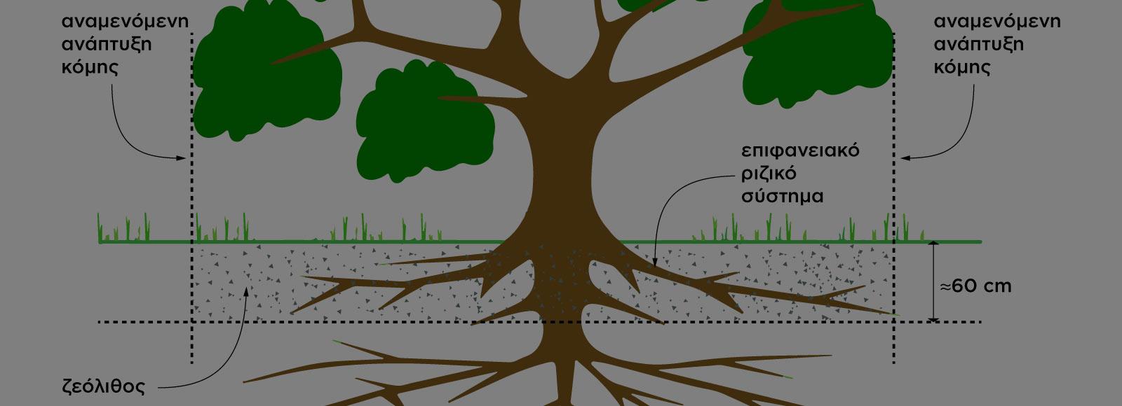 Ζεόλιθος σε νέα δέντρα – ο σωστός τρόπος ενσωμάτωσης