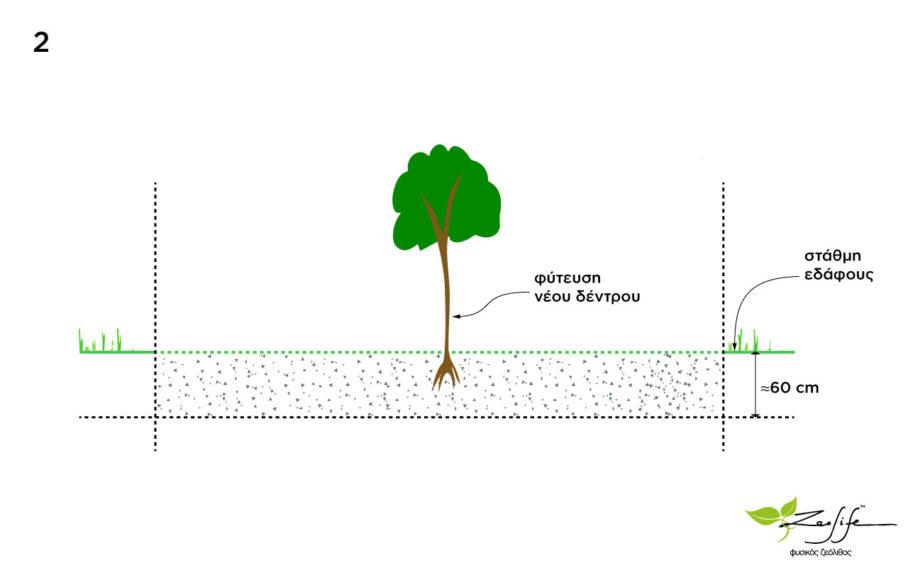 Φύτευση νέων δέντρων