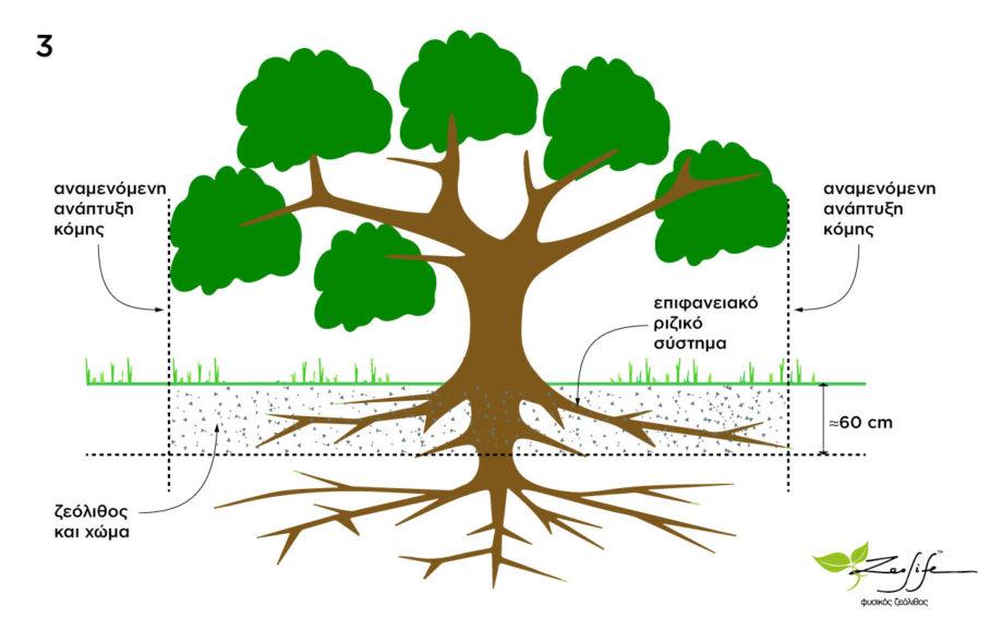 Αναμενόμενη ανάπτυξη δέντρου