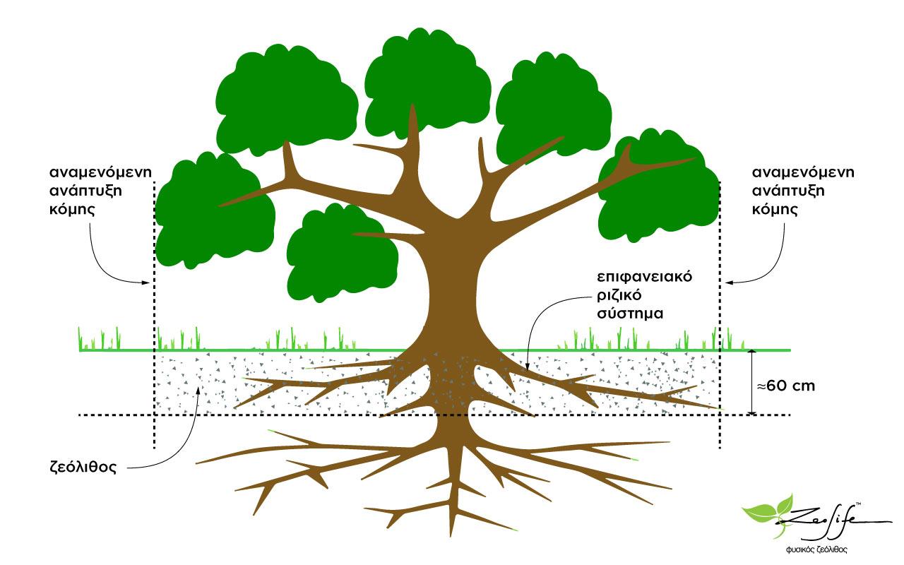 Ζεόλιθος σε νέα δέντρα, ο σωστός τρόπος ενσωμάτωσης.