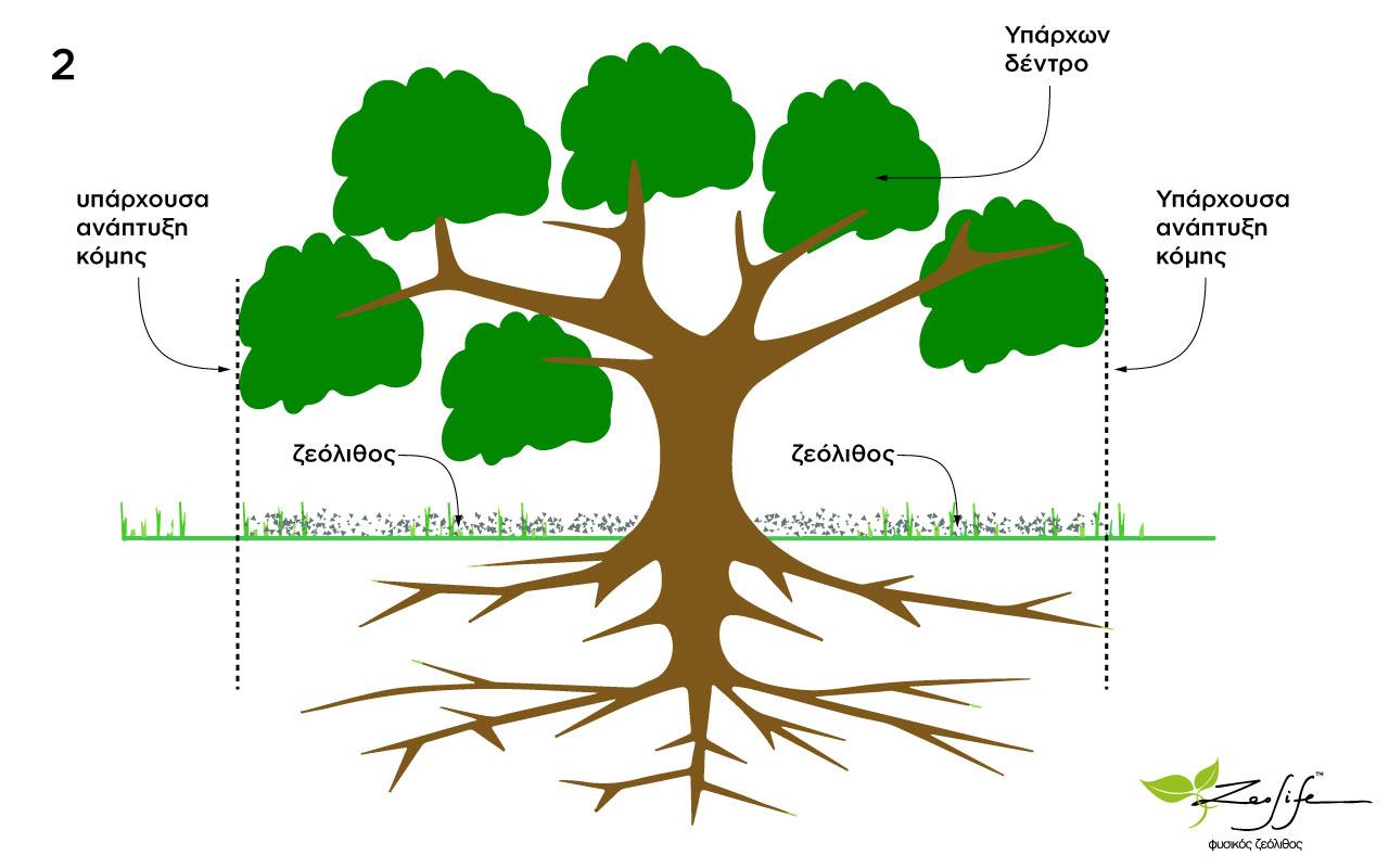 Ζεόλιθος σε υπάρχοντα δέντρα - ο σωστός τρόπος ενσωμάτωσης - επιθυμητό αποτέλεσμα επίπασης ζεόλιθου