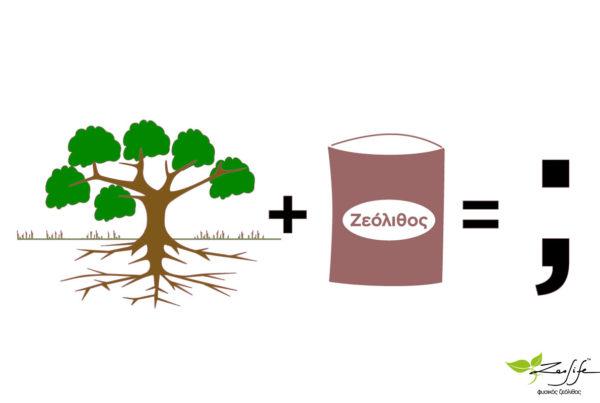 Ζεόλιθος σε υπάρχοντα δέντρα - ο σωστός τρόπος ενσωμάτωσης