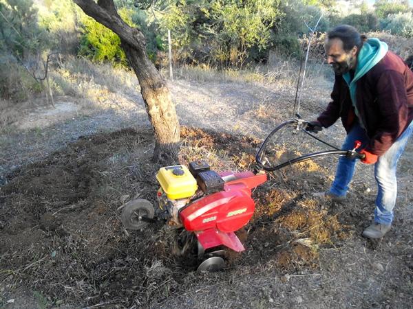 Ζεόλιθος στη γεωργία | Ενσωμάτωση ζεόλιθου σε ελαιόδεντρα | Zeolife.gr